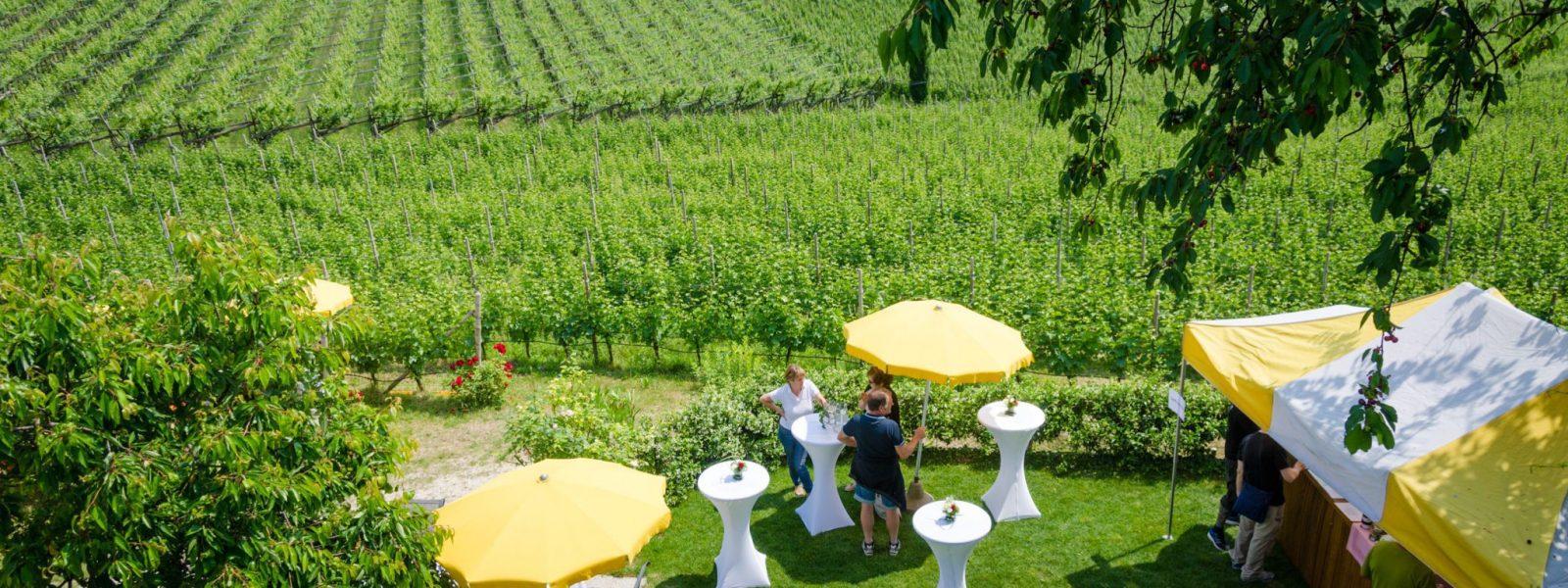 Gewürztraminer Weinwandertag