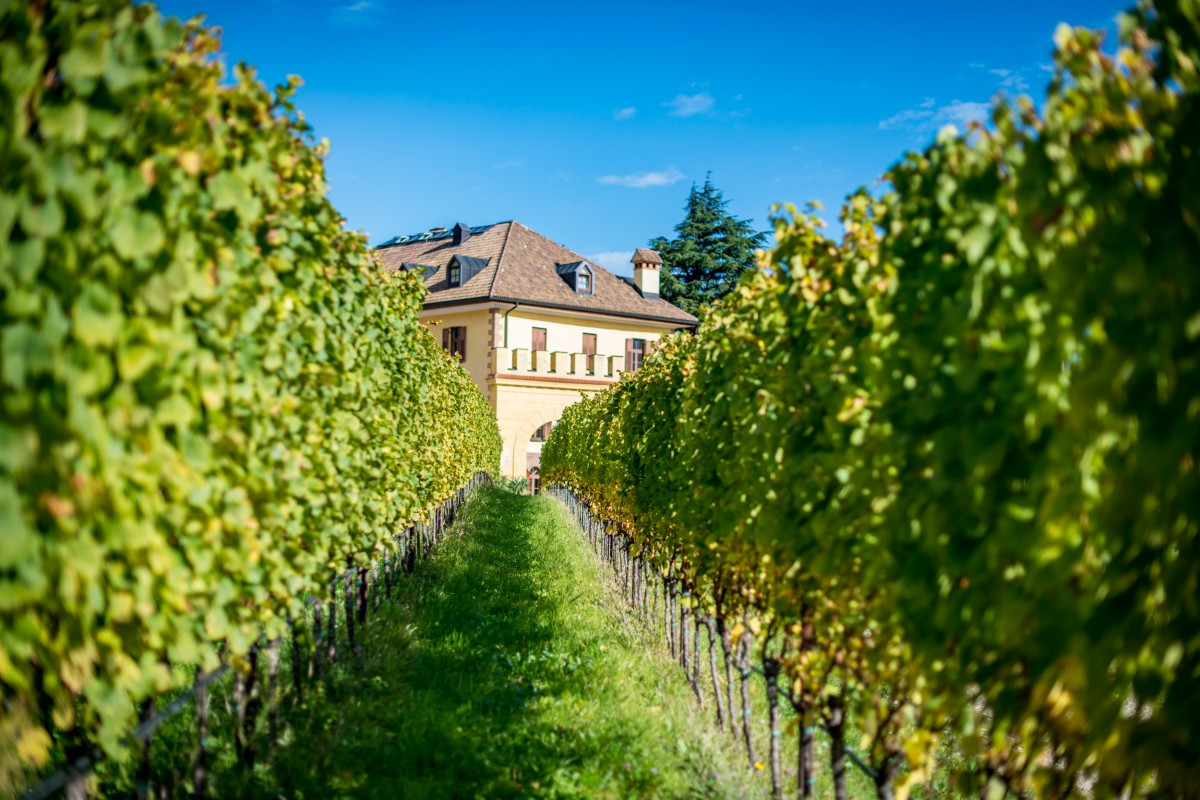 Weinberg Schloss Rechtenthal