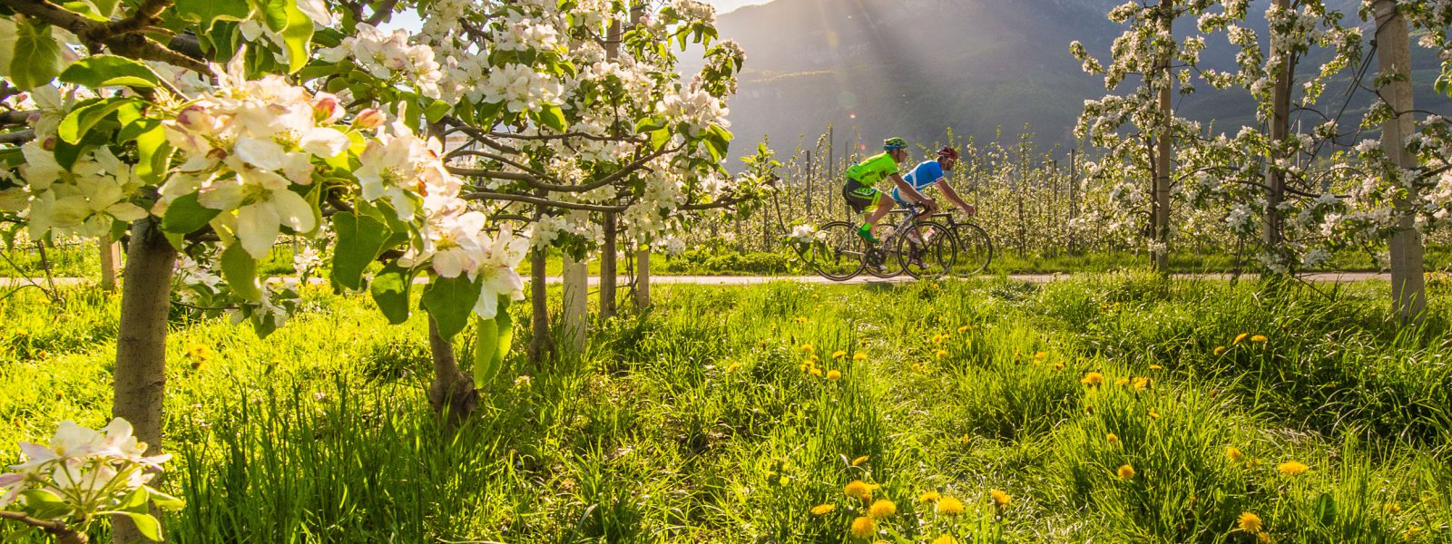 Rennrad Blüte Frühling