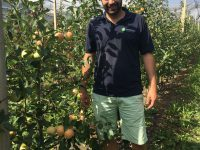 Neue Apfelsorte Tramin